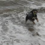 Dogs beach-0